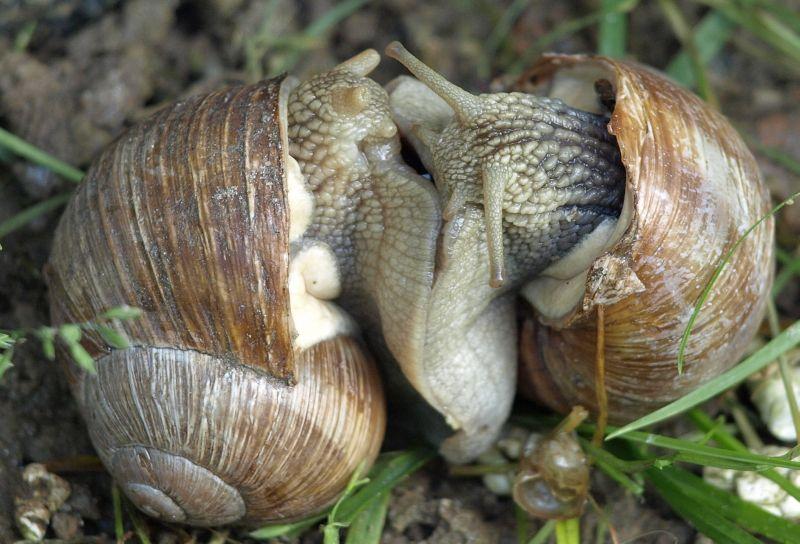 Oglądasz fotografie z Galerii Fauna