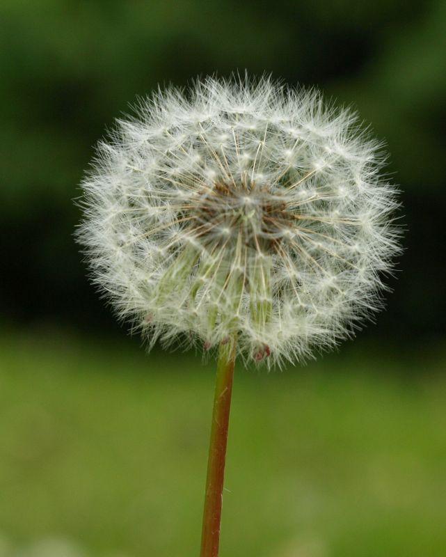 Oglądasz fotografie z Galerii Flora